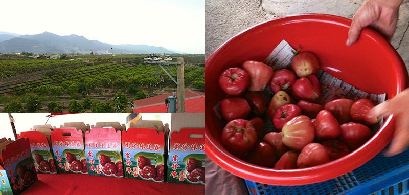 Taiwan Apple