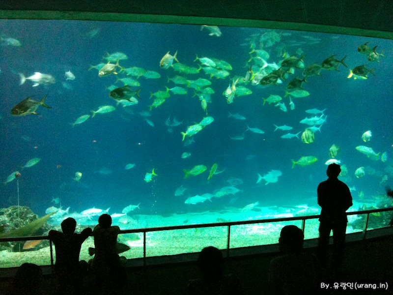 Taiwan Checheng Natioanl Museum of Marinebiology and Aquarium 10