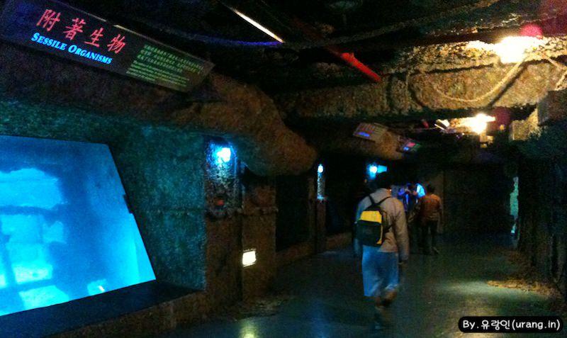 대만 국립 해양생물 박물관 난파선 구역