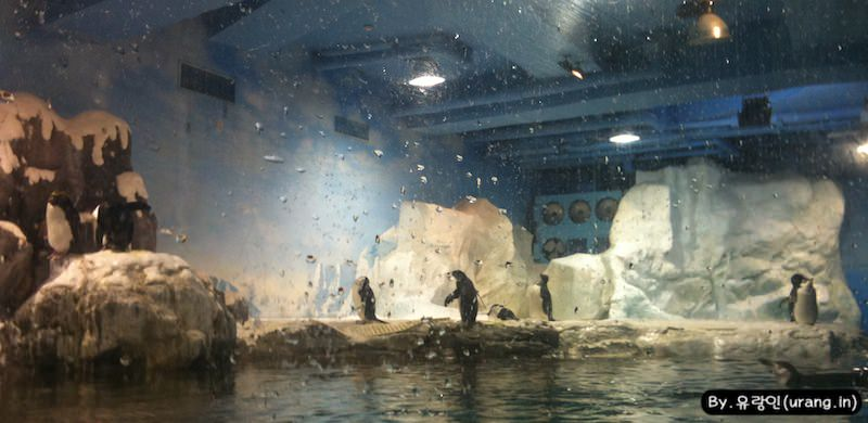 Taiwan Checheng Natioanl Museum of Marinebiology and Aquarium penguin